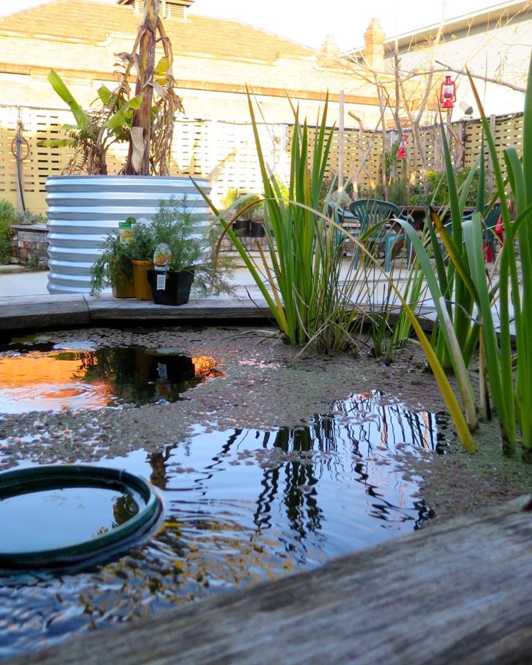 Garden Trees Wooden Outdoor Bech Rooftop Garden Garden: 25 Beautiful Rooftop Garden Designs To Get Inspired