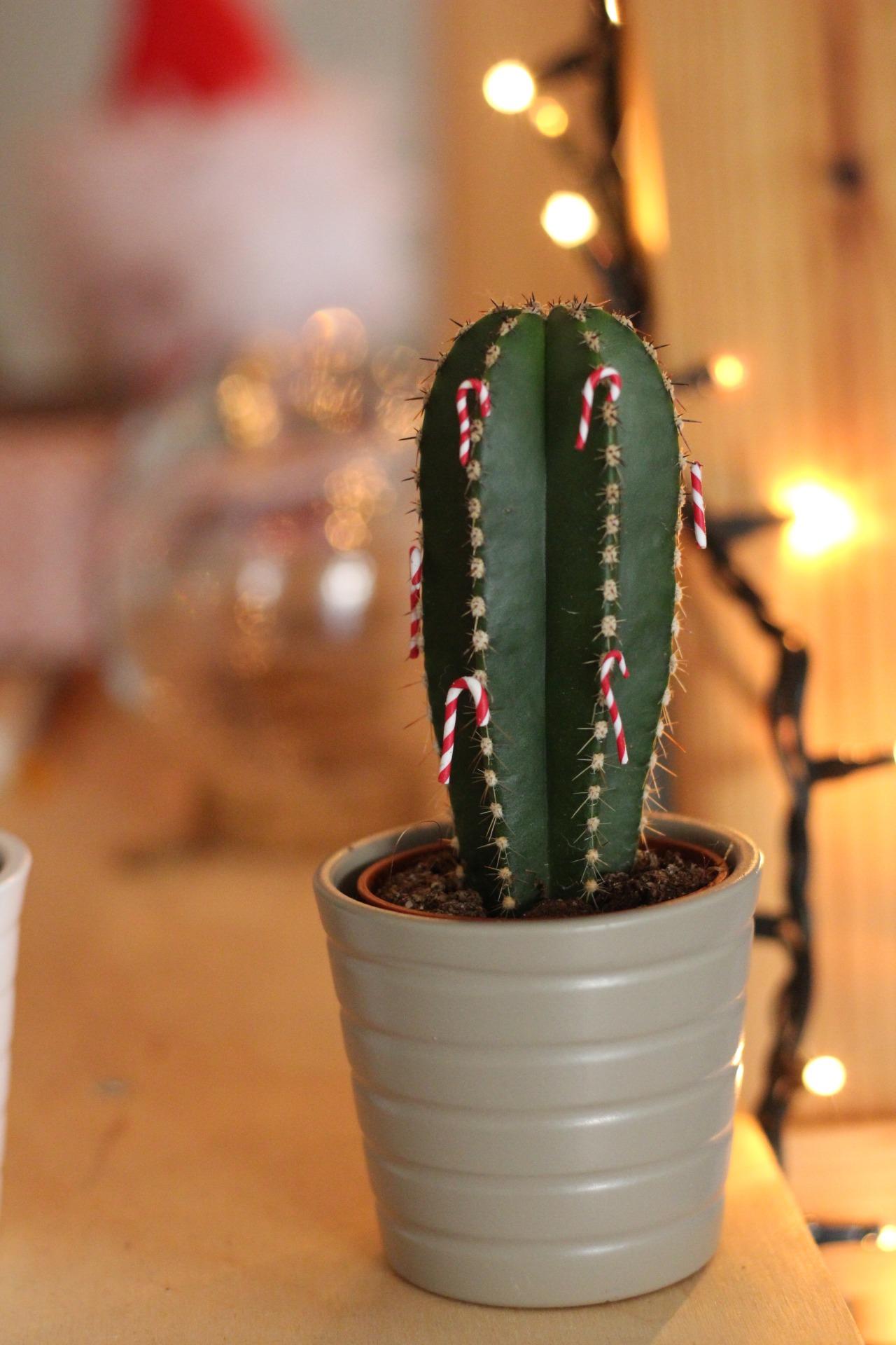 DIY Cactus Ornaments