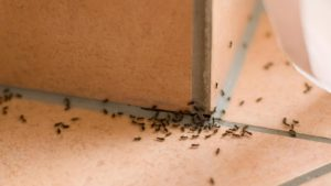 Are Termites Making a Meal of Your Home?
