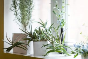 Indoor Plant Picks and Home Décor Ideas