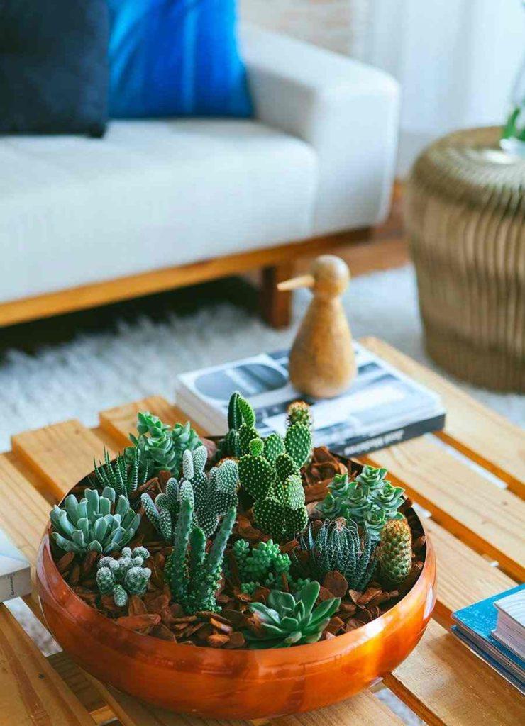 3 - Mini cactus and succulent garden as a table centerpiece
