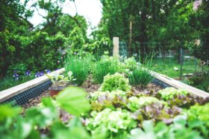 Up Your Garden Skills with New Plant Cultivars and Earth Friendly Fencing