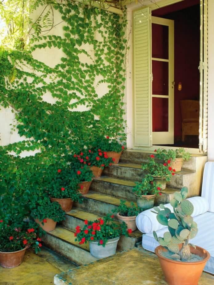 13. Vines and bindweed