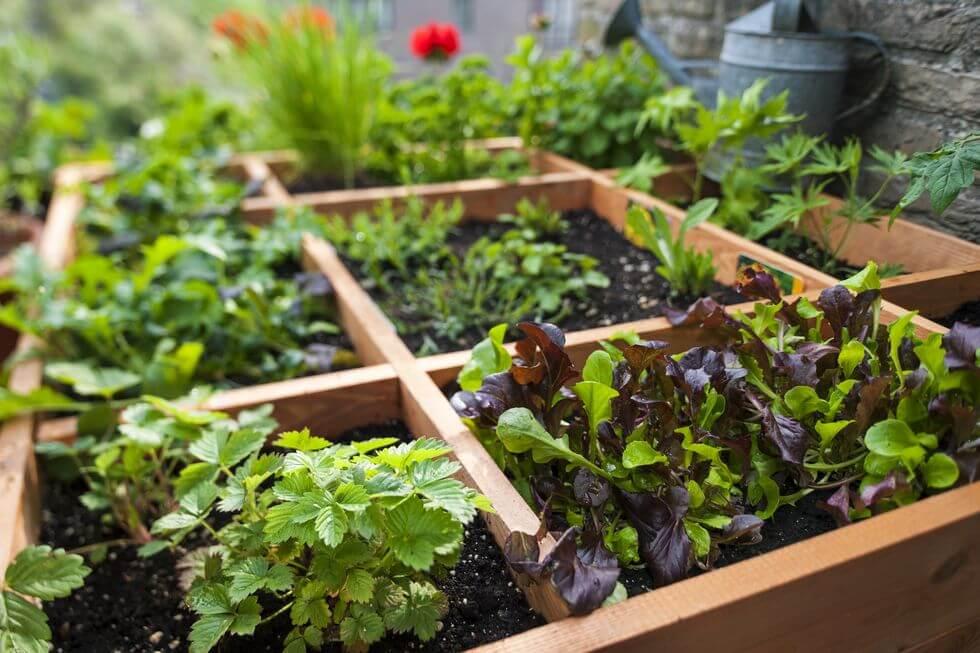 3. Use mixed plantings