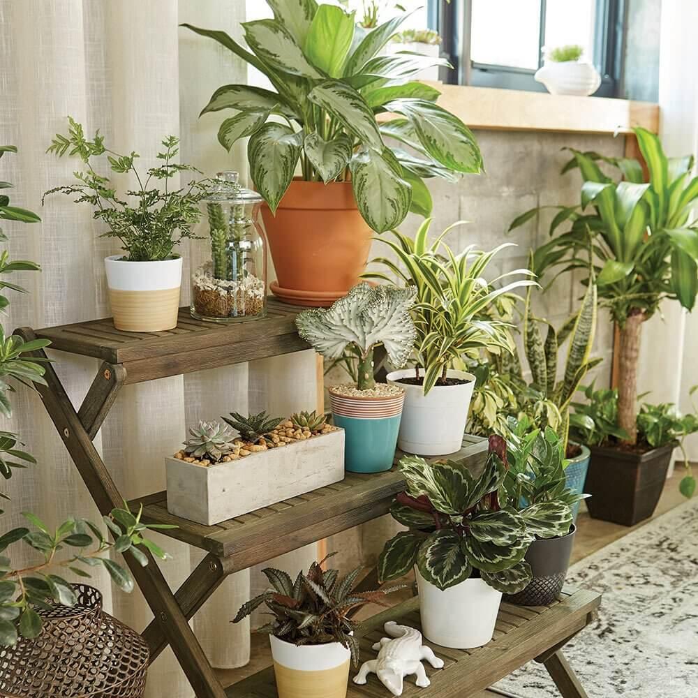 6. Plants - oases
