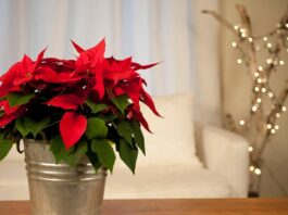 Christmas Decorations With House Flowers