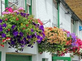 Flowers For Your Balcony