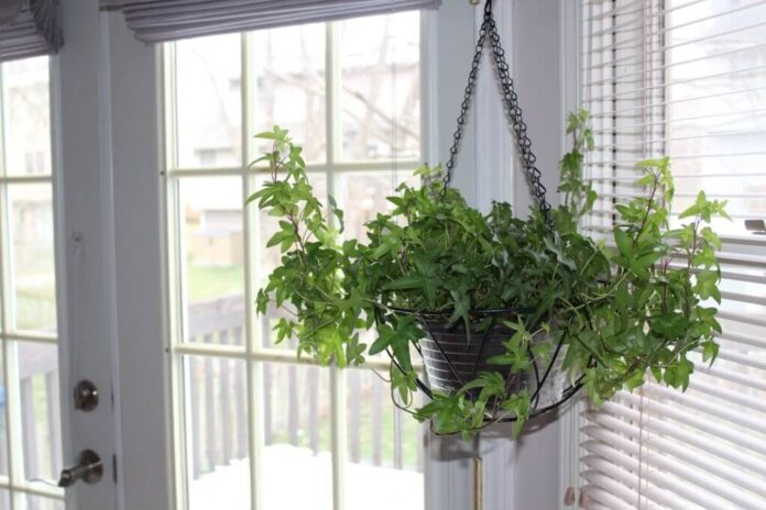 Suspended Plant Stand