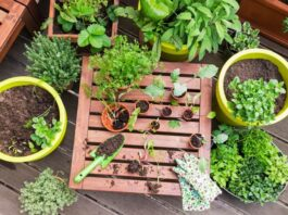 Vegetables On Your Balcony