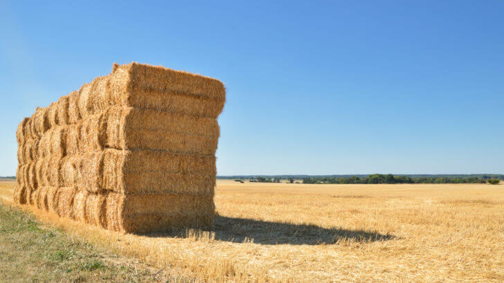 How To Grow Vegetables On Straw Bales