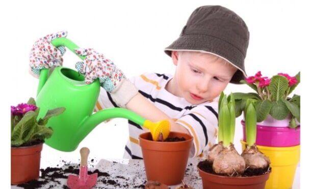 Nursery And Kindergarten Useful Plants Plus Dangerous Plants