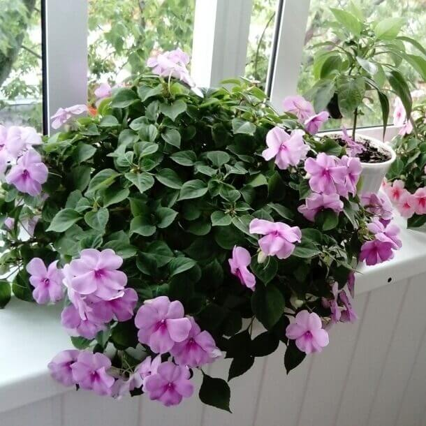 Top 15 Balcony And Loggias Plants And Flowers