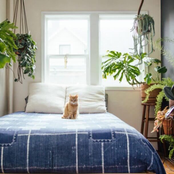 Most 15 Amazing Bedroom Plants And Worst Plants