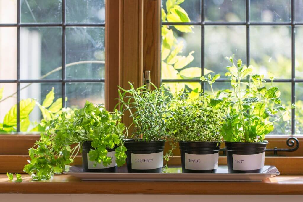 What Edibles Can Be Grown On The Windowsill In Winter And Summer