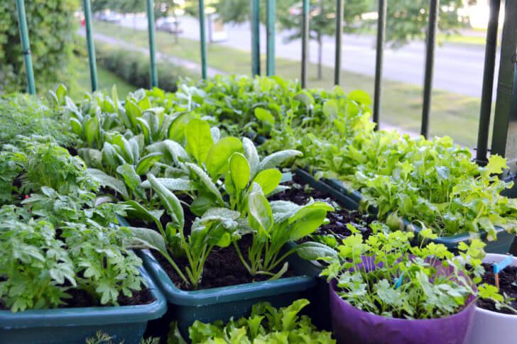 What Is The Best Way To Grow Spinach In A Pot?
