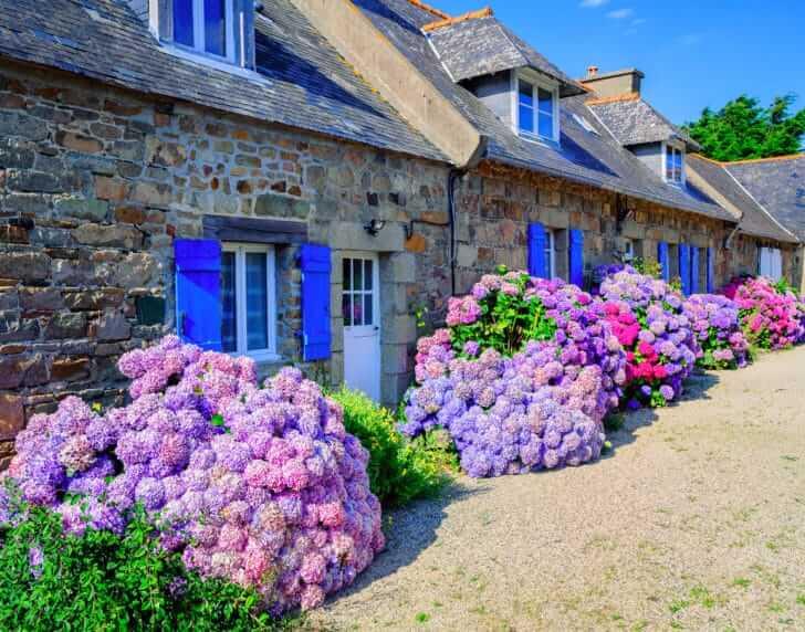 10 Huge Flowering Plants To Consider For Your Garden