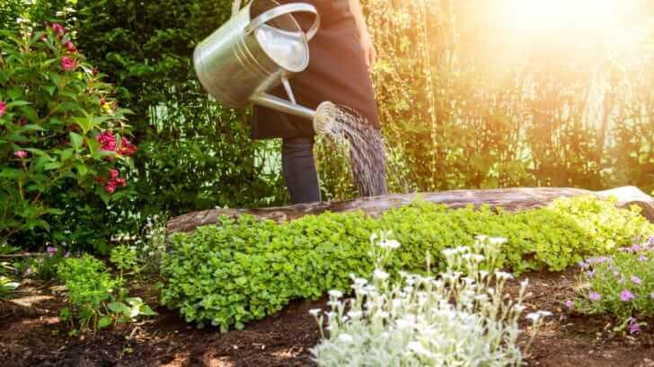 6 Ideas For A Successful Vegetable Garden
