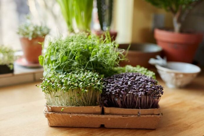 Herb-growing For The Kitchen