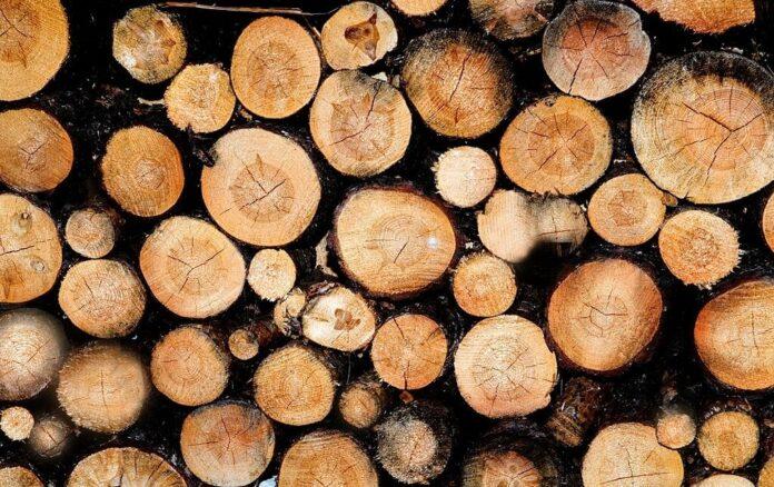 Log Canopy