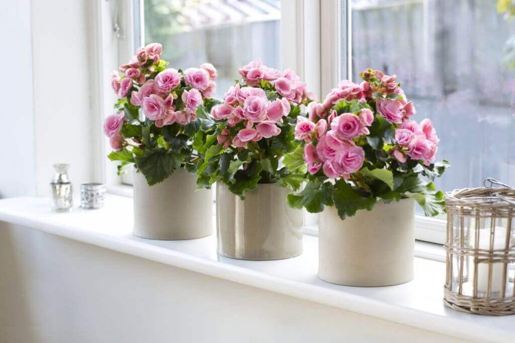 How To Decorate And What To Put On The Windowsill